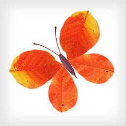 Labo feuilles |
